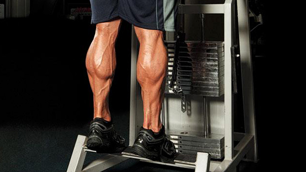 DC Training Calves